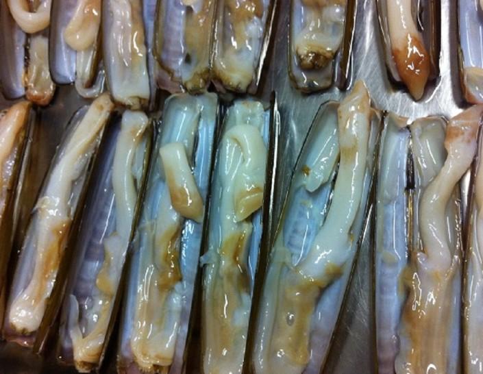 Ristorante Maestrale Roma pesce - Cannelli freschissimi