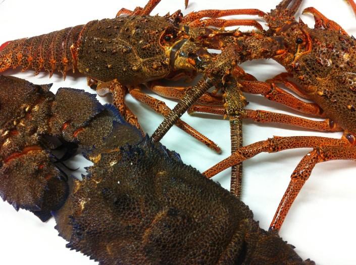 Ristorante Maestrale Roma pesce - Cicale di mare ed aragoste