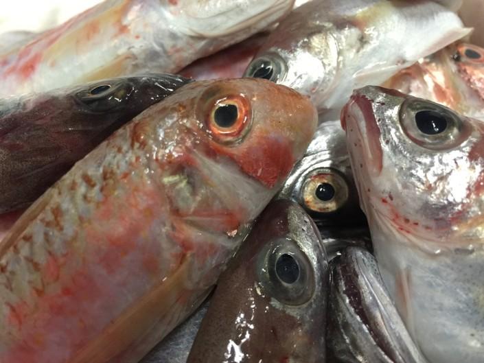 Ristorante Maestrale Roma pesce - Pesce freschissimo di paranza