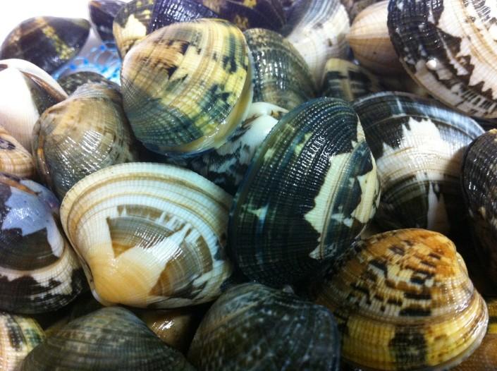 Ristorante Maestrale Roma pesce - Vongole di mare freschissime